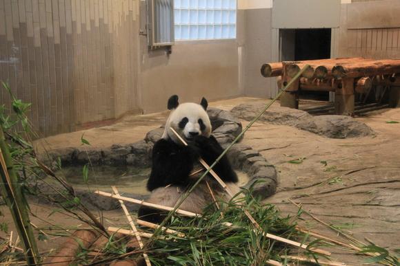 上野動物園!!_d0202264_6164441.jpg