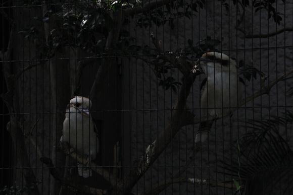 上野動物園!!_d0202264_6191617.jpg