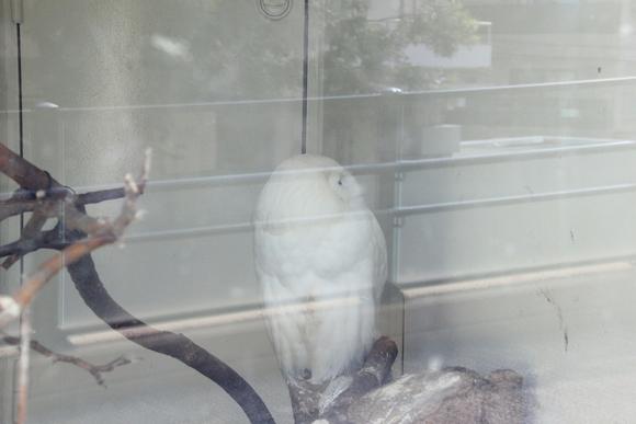 上野動物園!!_d0202264_6221762.jpg