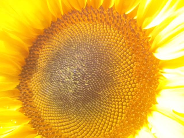 夏の色_a0138985_23161528.jpg
