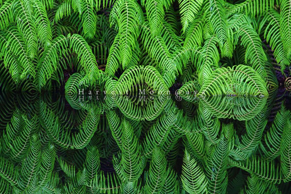 歴史植物_b0208495_19582712.jpg