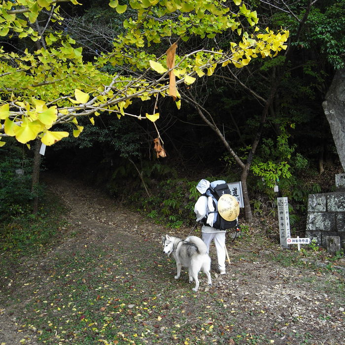 Memory of the second pilgrimage with husky HANA_c0049299_7234343.jpg