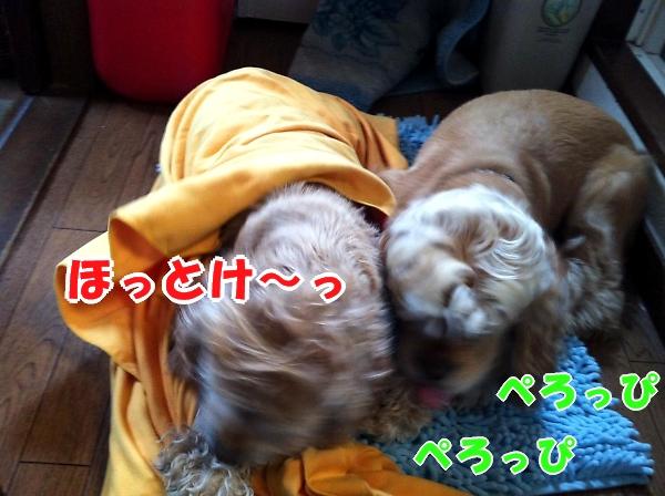 b0067012_23364552.jpg