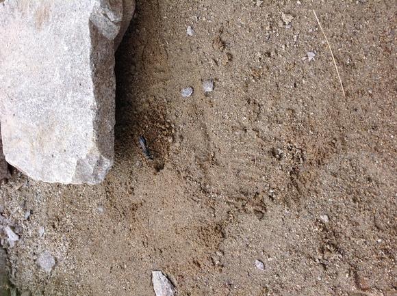 庭造り と 巣穴づくり _e0128446_18374776.jpg