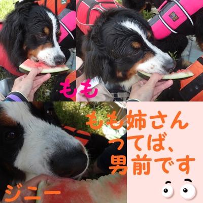 ジニーと福豆の初泳ぎ_e0270846_11452762.jpg