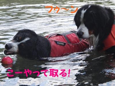 ジニーと福豆の初泳ぎ_e0270846_12561672.jpg