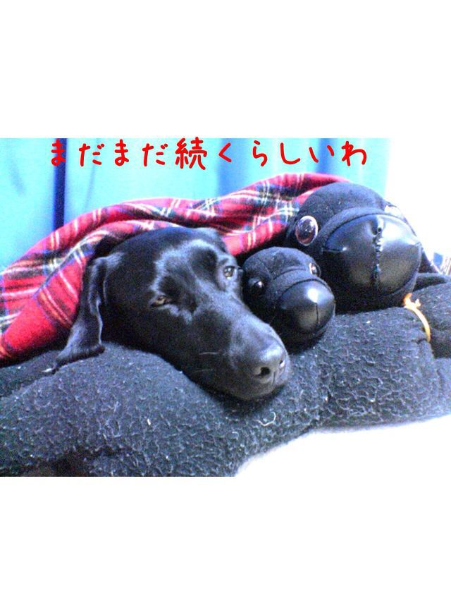 スルスミ日記☆1話_e0244283_125857.jpg