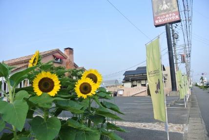 07/31 お散歩_e0236430_20251786.jpg
