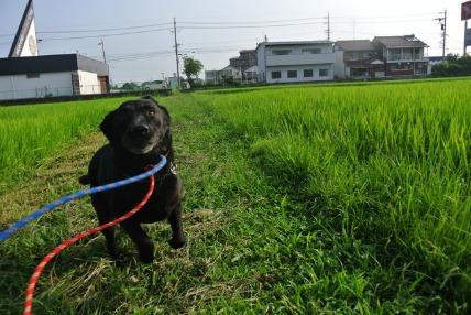 07/31 お散歩_e0236430_20251812.jpg