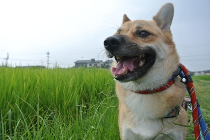 07/31 お散歩_e0236430_20254092.jpg