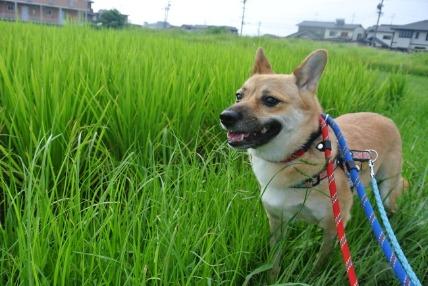 07/31 お散歩_e0236430_20262210.jpg