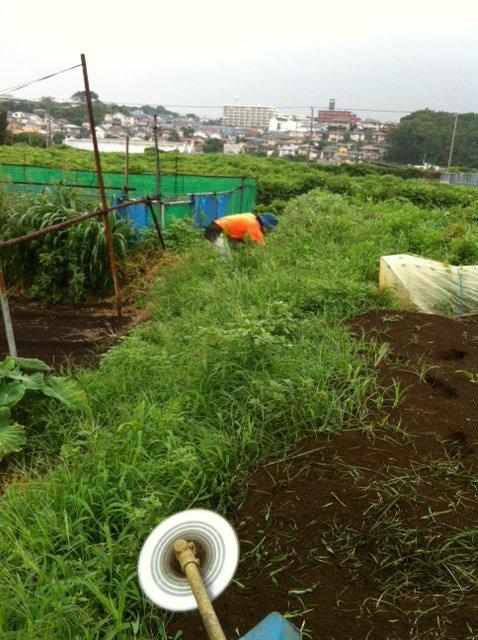 本日はYさん親子が畑に参加 A氏&Sさんと飯田です_c0222448_1930095.jpg