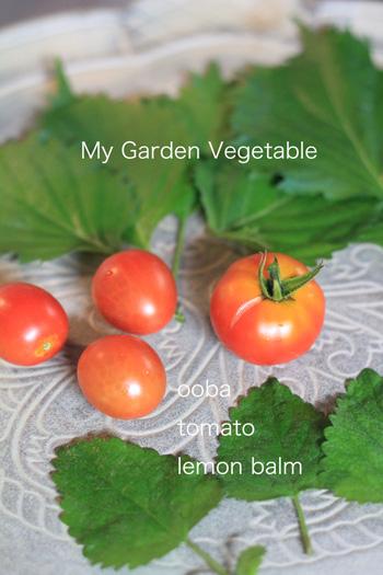 my garden_e0158653_1658237.jpg