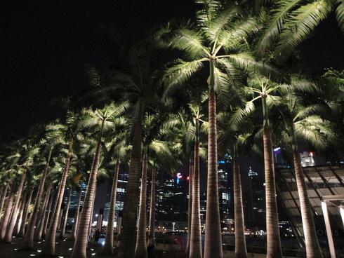 大好き♪シンガポール旅行 その11 マリーナベイサンズ&TWG_f0054260_16484817.jpg
