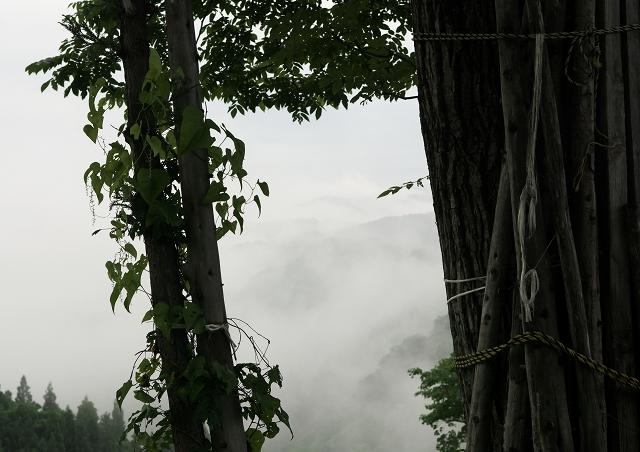 梅雨の松之山_f0018464_7364021.jpg