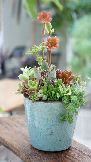 タニク植物のワークショップ_f0224568_9534868.jpg