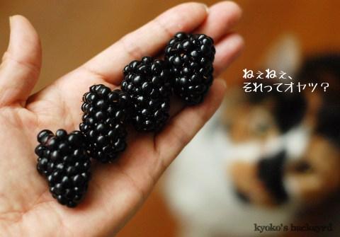 ブラックベリージェラート_b0253205_4244167.jpg