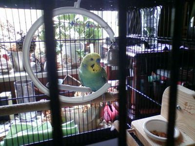 小鳥が来た♪_c0060919_22163862.jpg
