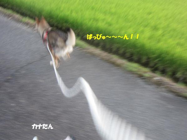 f0143123_21301739.jpg