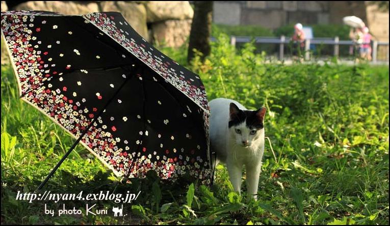 ダラダラの外猫さん_f0166234_20565610.jpg