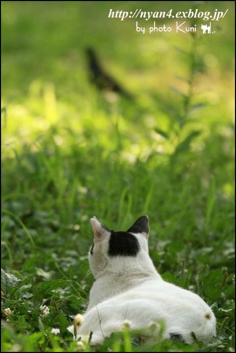 ダラダラの外猫さん_f0166234_20572959.jpg