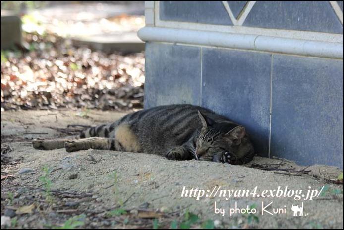 ダラダラの外猫さん_f0166234_20592034.jpg