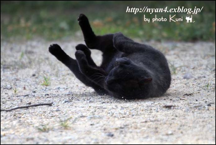 ダラダラの外猫さん_f0166234_22131580.jpg