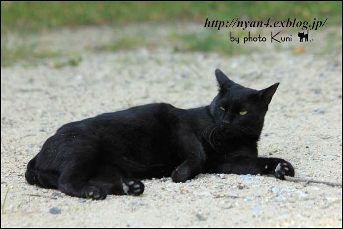 ダラダラの外猫さん_f0166234_2263584.jpg