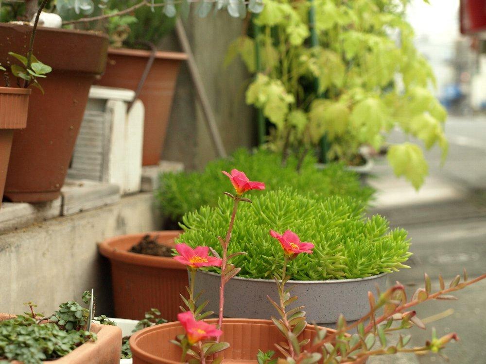 ☆赤い花のフフと、「ソックリ広告博物館」のムム☆_c0092953_18553456.jpg