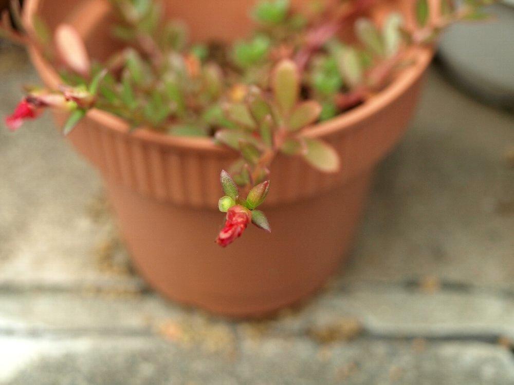 ☆赤い花のフフと、「ソックリ広告博物館」のムム☆_c0092953_190040.jpg