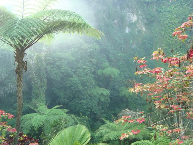 バリ島へ行く。④ ~ヨガと瞑想と私~_f0232060_1536971.jpg