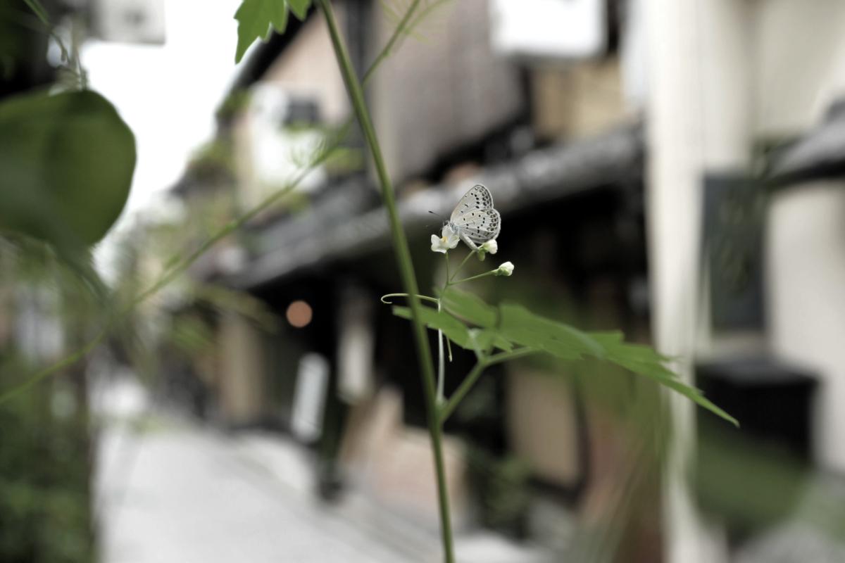 祇園スナップ_f0021869_0401586.jpg