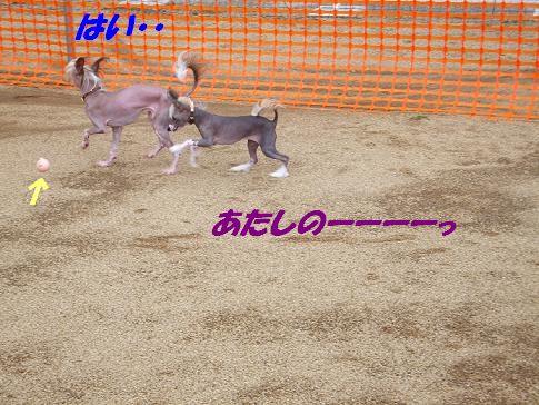 f0179203_1529687.jpg