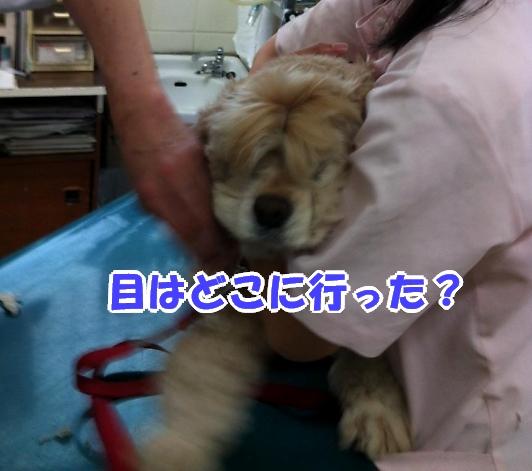 b0067012_0525522.jpg
