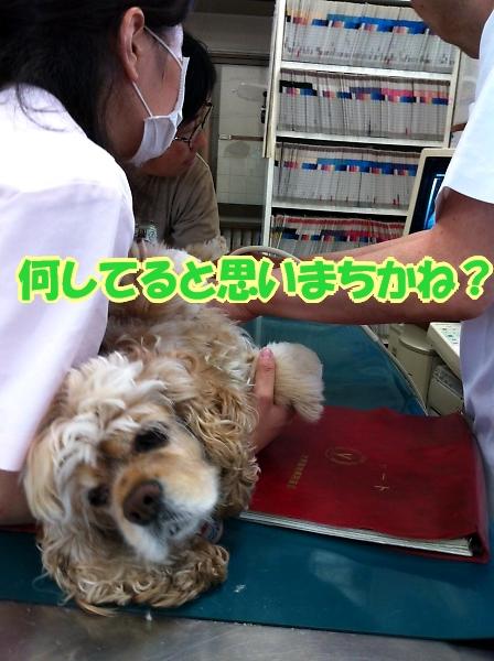 サラっぴ、ぷち受難でちから_b0067012_11455967.jpg