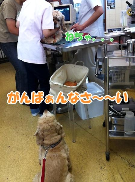 サラっぴ、ぷち受難でちから_b0067012_1146281.jpg