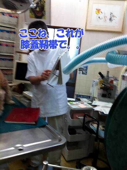 サラっぴ、ぷち受難でちから_b0067012_11471448.jpg