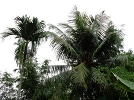 豪雨の夜明けに_a0043520_15402351.jpg