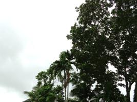 豪雨の夜明けに_a0043520_15493258.jpg