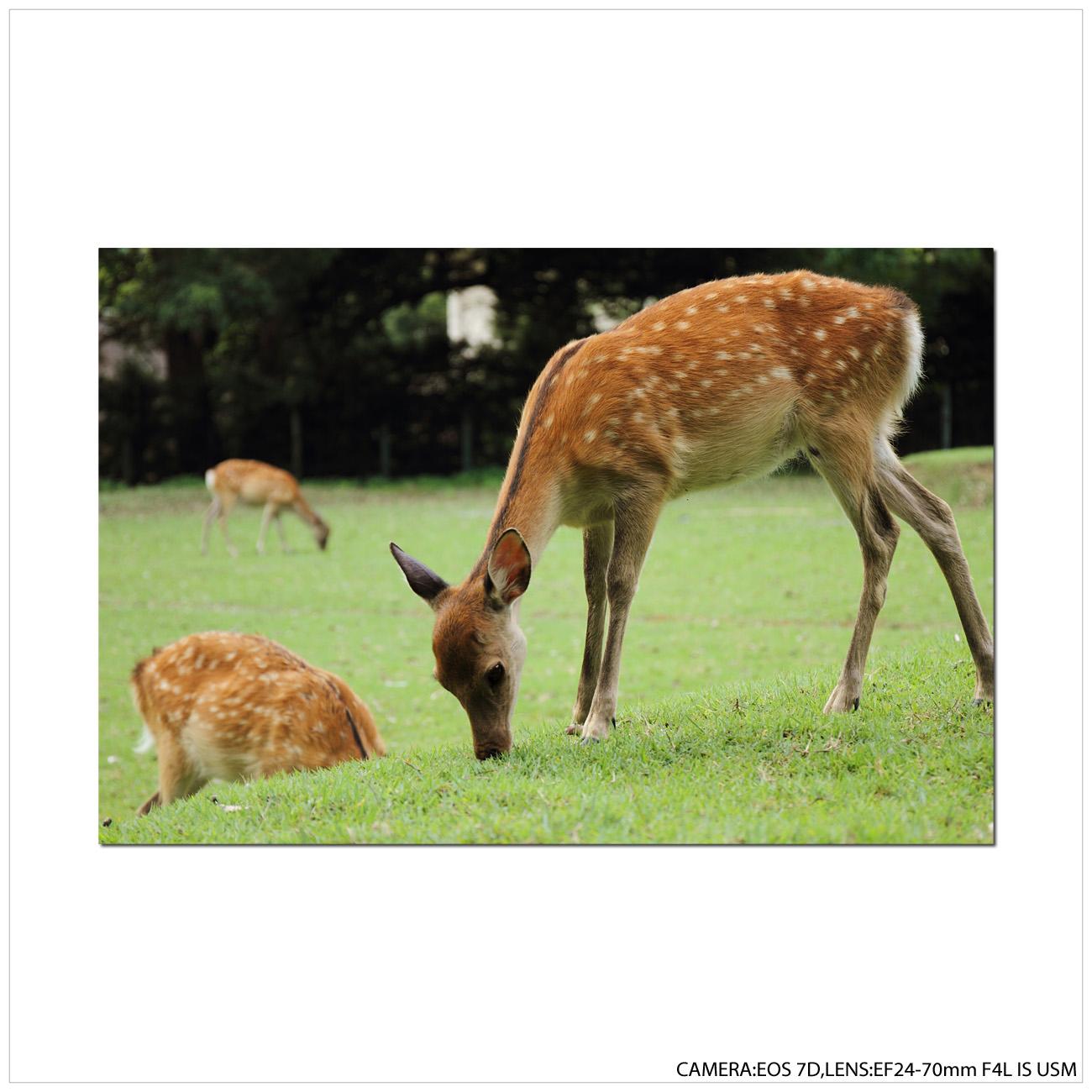 奈良へ行ってきました。_e0214724_19593097.jpg