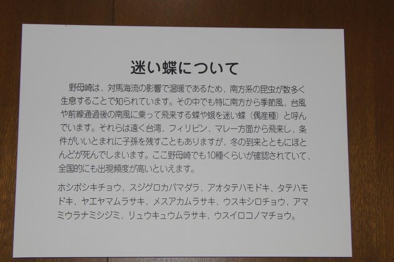 クロマダラソテツシジミぢゃ_c0065260_7564788.jpg