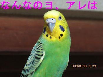 f0196665_0113255.jpg