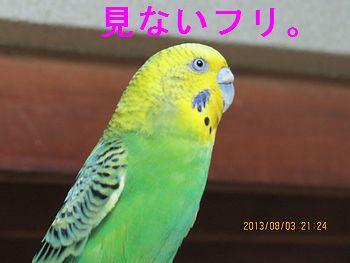 f0196665_0114850.jpg