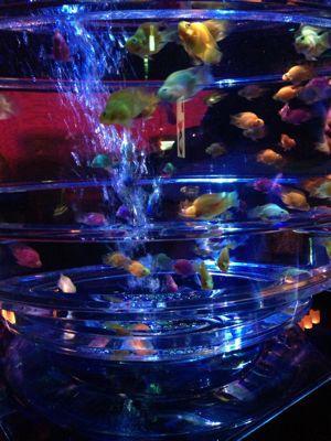 金魚は涼しい♪_e0076995_1849798.jpg