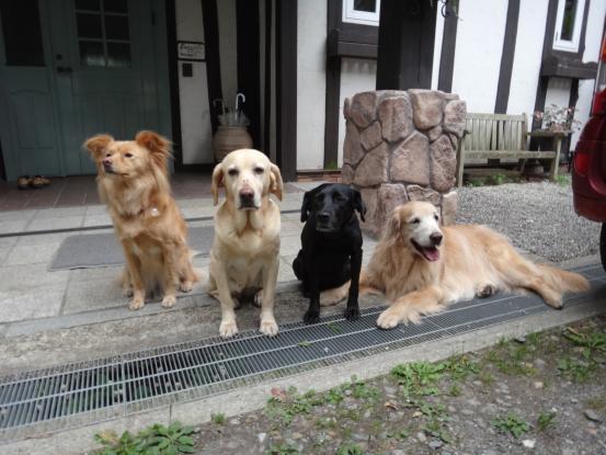 人間も犬も世代交代_f0064906_15542891.jpg