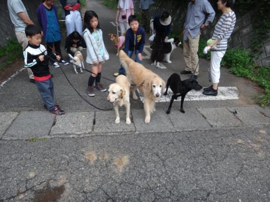 人間も犬も世代交代_f0064906_1615720.jpg
