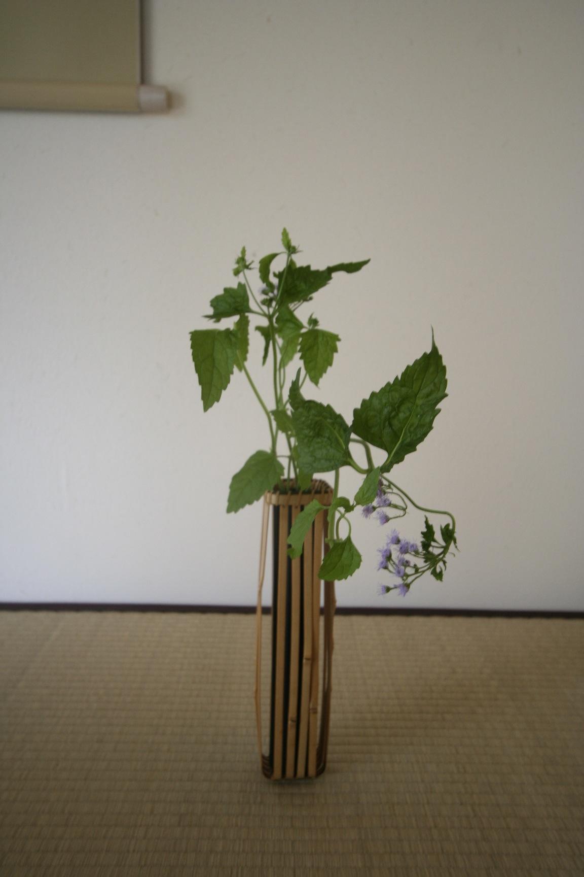 新居でもやっぱり花が_a0148909_15592283.jpg