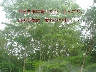 b0200310_2315025.jpg