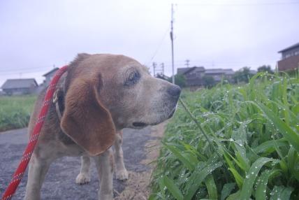 08/05 お散歩_e0236430_224928100.jpg