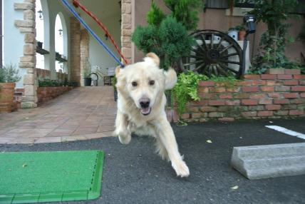 08/05 お散歩_e0236430_22493833.jpg